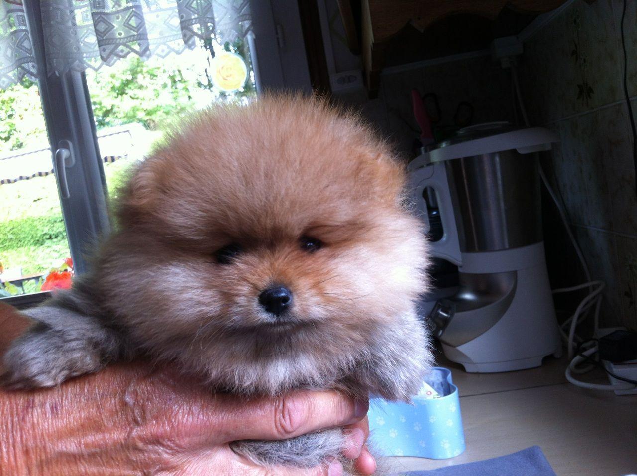 Bebe boo chien - Image bebe chien ...